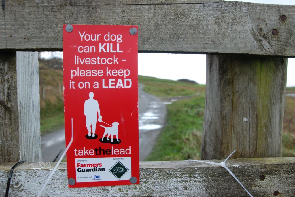 Man charged after second Inveraray sheep attack