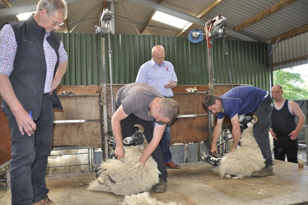 Shear magic as young farmers test their skills
