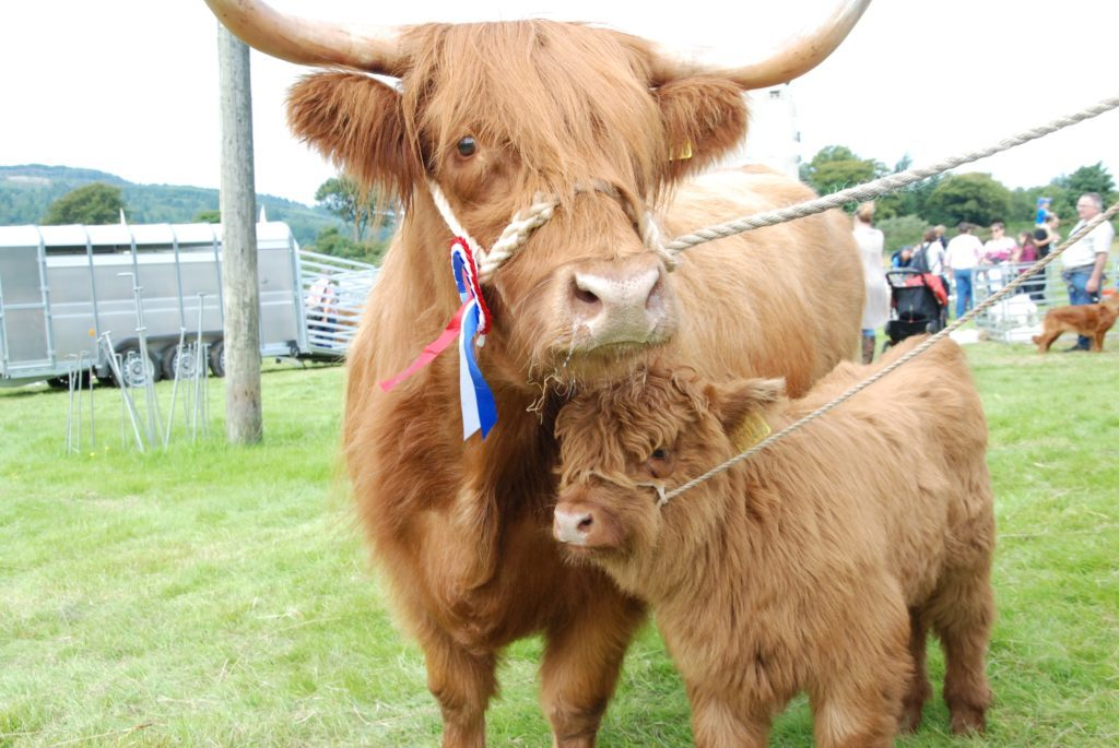 Record-breaking Mid Argyll Show basks in the sun