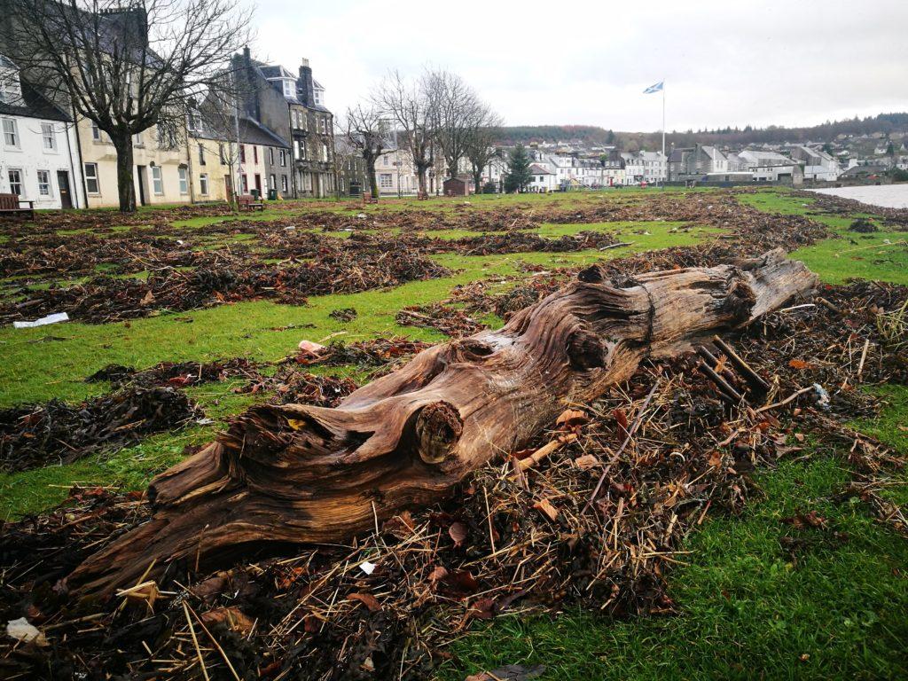 Knotweed not a storm problem, says council