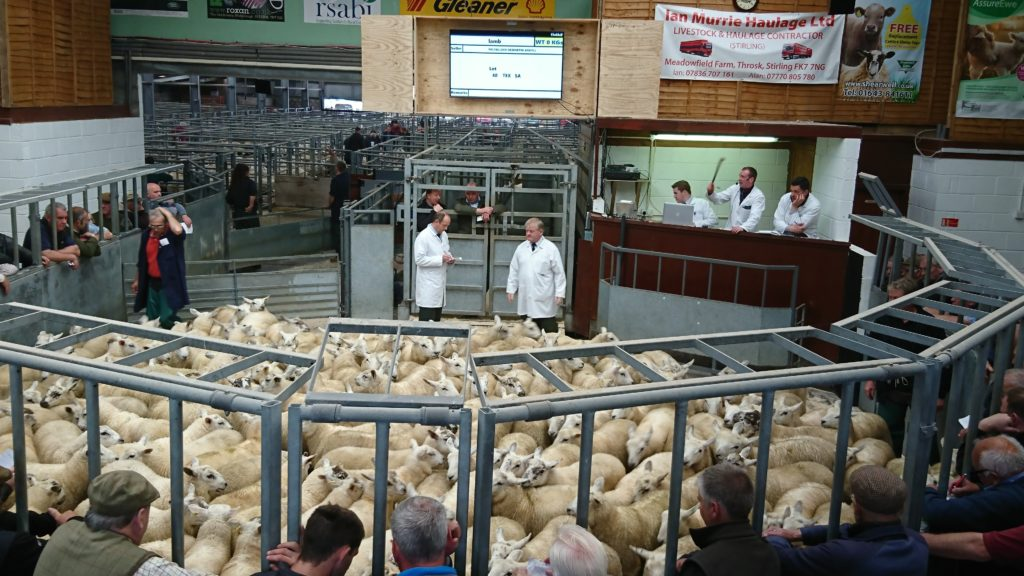 'Exceptional' show of lambs at Oban mart