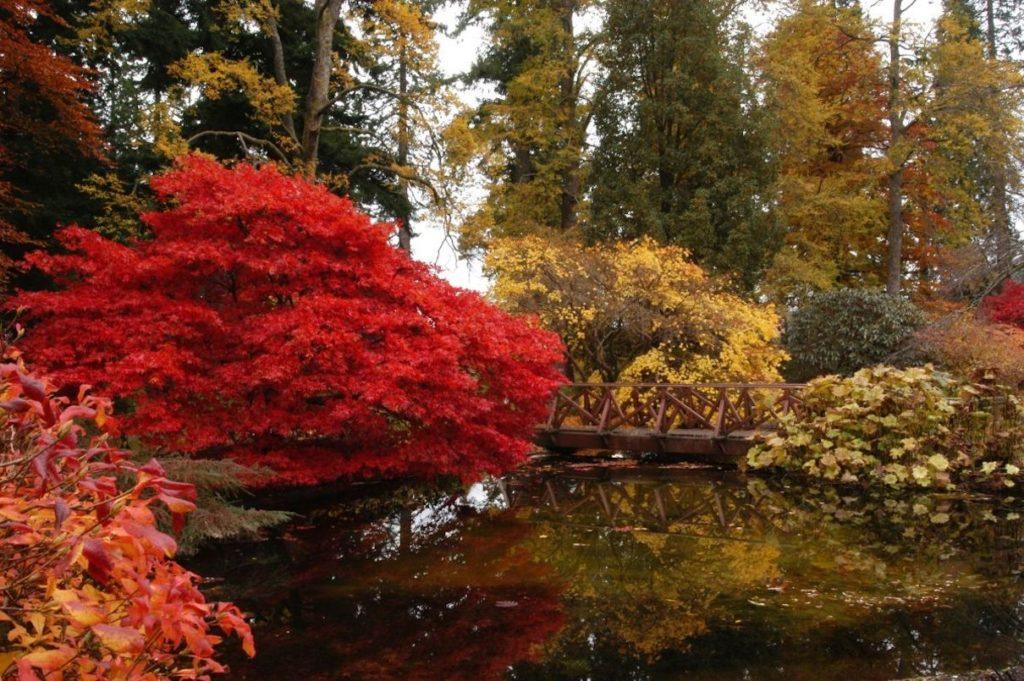 Last ten Decembers wettest on record at Benmore Garden