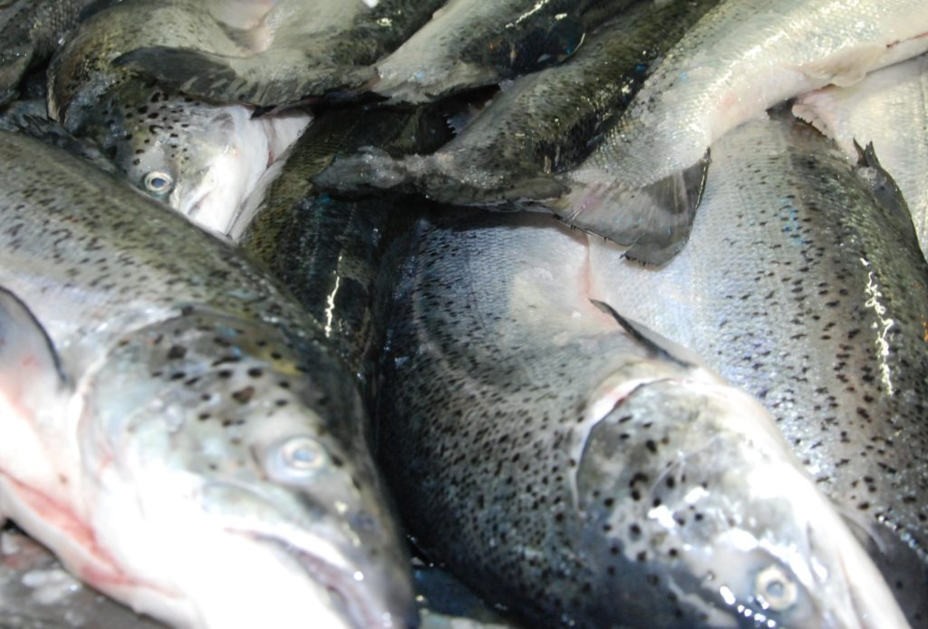 If you're offered salmon off the back of a lorry – be careful